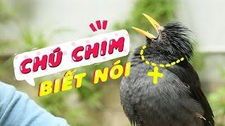 Chim Biết Nói Độc Nhất Vô Nhị
