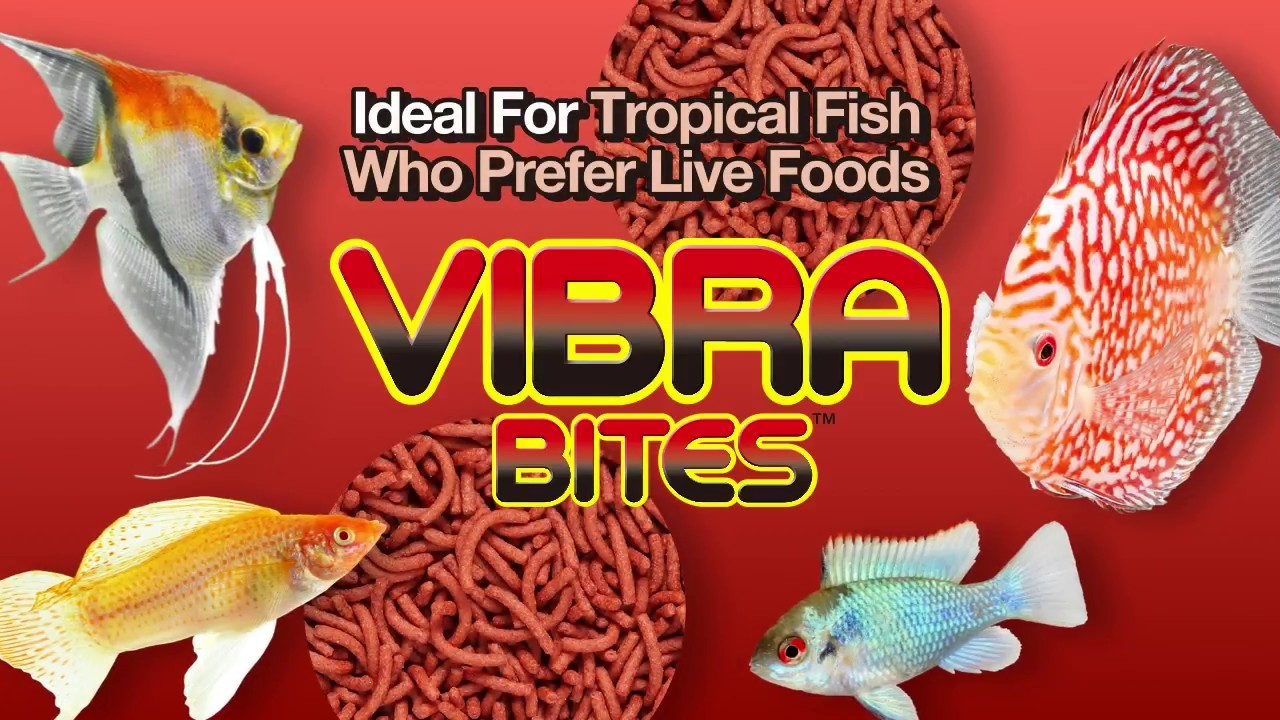 Hikari Info Hikari Tropical Vibra Bites