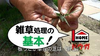 プロが教える雑草処理の基本 thumbnail