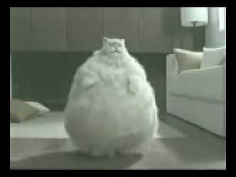 El gato gordo - 3 part 8