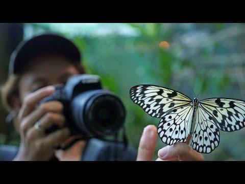 Most Beautiful Philippines Mountain Resort - Mambukal Mountain Resort Bacolod Vlog