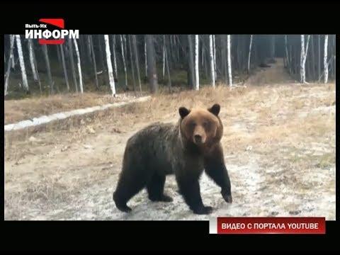 Внимание: в районе ГПЗ замечен медведь