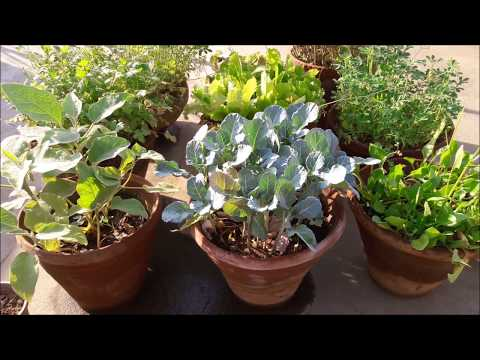 Best vegetables grow in containers ll गमलों  में  उगाए  हरी  सब्जियां  ll  Container Gardening Ideas