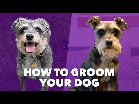 How We Deal at Home: DIY Dog Grooming