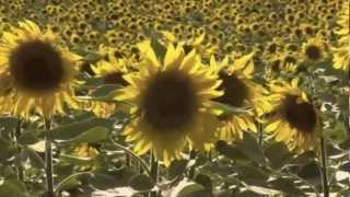 """Lisa Anita Baker, """"Little Sunflower"""""""
