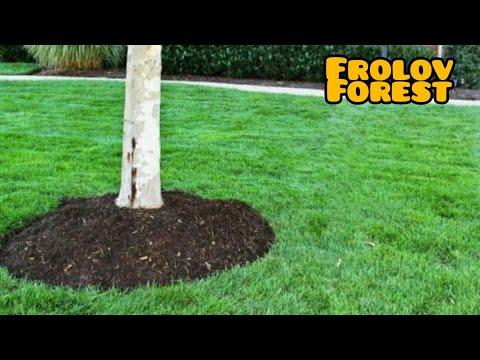 Окапывание деревьев в саду. Достоинства и недостатки.