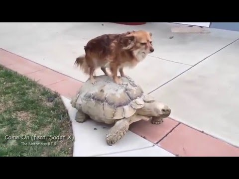 Cats and Turtles