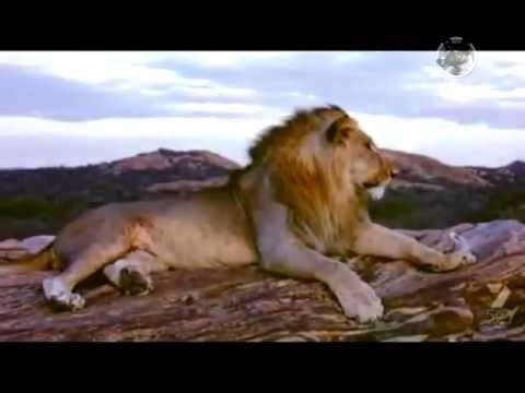 Un León Llamado Christian (Homenaje)