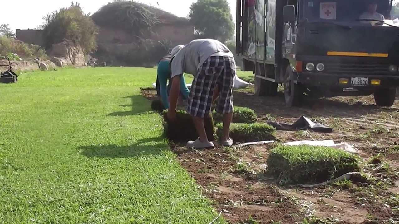Como poner pasto natural youtube for Tipos de cesped natural para jardin