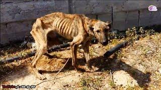 كلب يونانى يثير تعاطف العالم - شاهد القصة الغريبة !!
