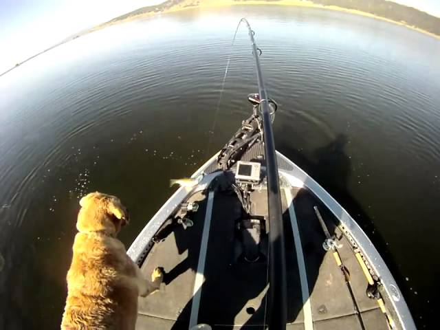 POV Bass Fishing with Bink Desaro and Fetha Styx