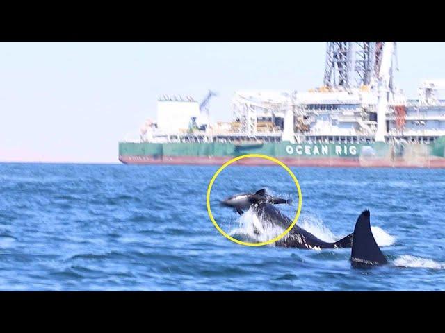https://www.metro.pr/pr/destacado-tv/2018/03/20/video-capta-dos-orcas-atacan-delfin.html