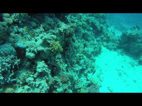 Tiran Island Diving With Jasmine Tours