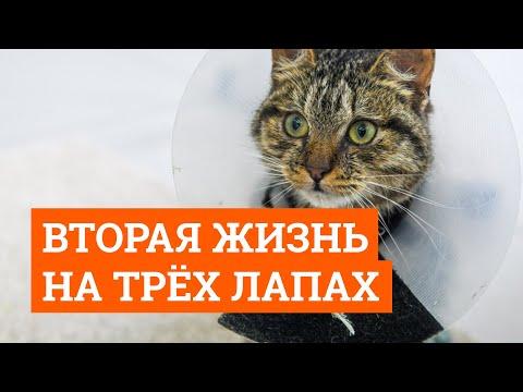 Вопрос: А что за кот Липтон, какая его история?