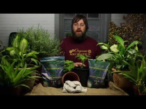fuhgeddaboudit!-root-zone-feeder-packs