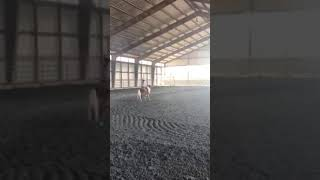 Adelyn and FunnyFace Bucking Poles