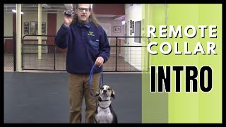 Remote Collar Introduction
