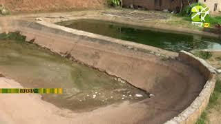 Visite D' Une Ferme Piscicole Intégrée Au Cameroun