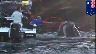 Кит попросил рыбаков о помощи