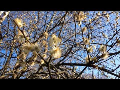"""Gedicht """"Frühling lässt sein blaues Band"""" von Mörike"""