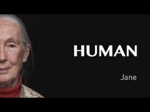 Interjú Jane Goodall-lel | 1