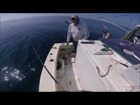 Commercial Grouper Fishing Gulf Of Mexico