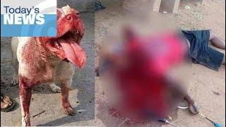 Animal Attack 2017 |  7 Worst Pitbull Attacks  Ep 76