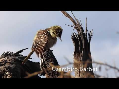 Birds Of Tanzania 2019