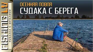 Ловля СУДАКА с берега осенью как ловить судака с берега zandartu cope Lielupē