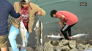 Sacramento Striper Fishing Catch And Cook