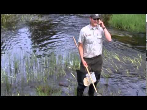 U.S. Fish and Wildlife Service works to control sea lamprey population