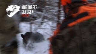 Repeat youtube video Wildboarhunting by Kristoffer Clausen, Villsvinjakt
