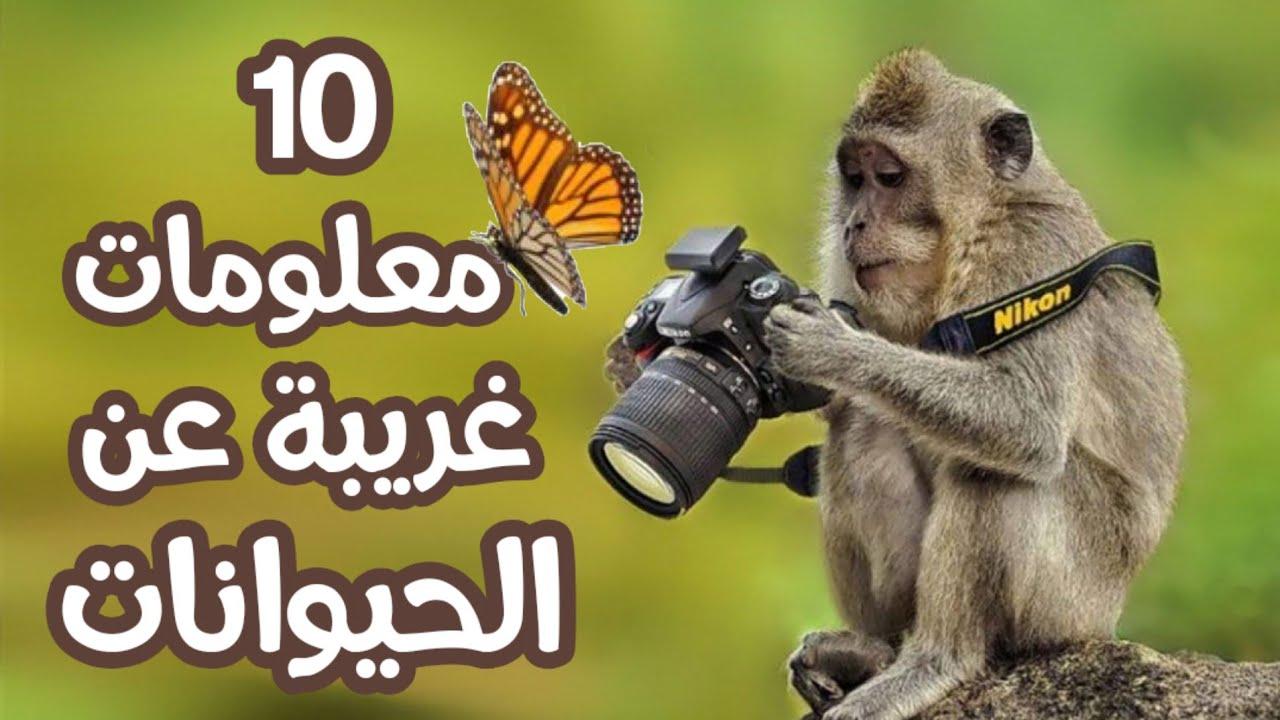 10 معلومات غريبة عن الحيوانات هل تعلم Zinebtaki Youtube