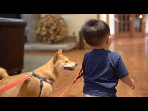 Dog and Baby Stay at a Hotel Alone.