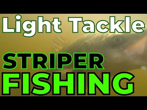 Light Tackle Striper Fishing | July :: Rye NH