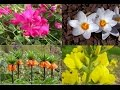 watch he video of Only in Turkey: 16 endemic plant species.