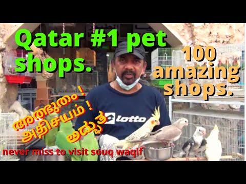 DOGS & PETS  Largest pet Market in Doha, Qatar.  Souq Waqif Tour,   PET MARKET.