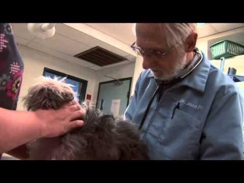 Animal Clinic Stockton, Dr  John Fox