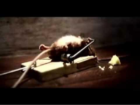Rato preso na ratoeira - Só para os fortes