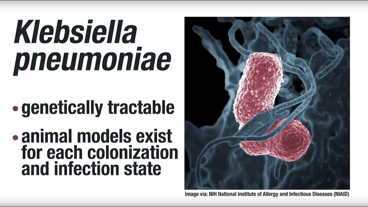 A klebsiella pneumoniae kenet férfiakban)