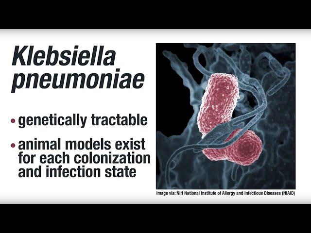 bacterie klebsiella pneumoniae symptoms