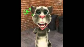 Şarkı söyleyen kedi mardin kapı