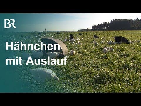 Prämiertes Stallkonzept: Glückliche Hähnchen mit Auslauf | Unser Land | BR Fernsehen