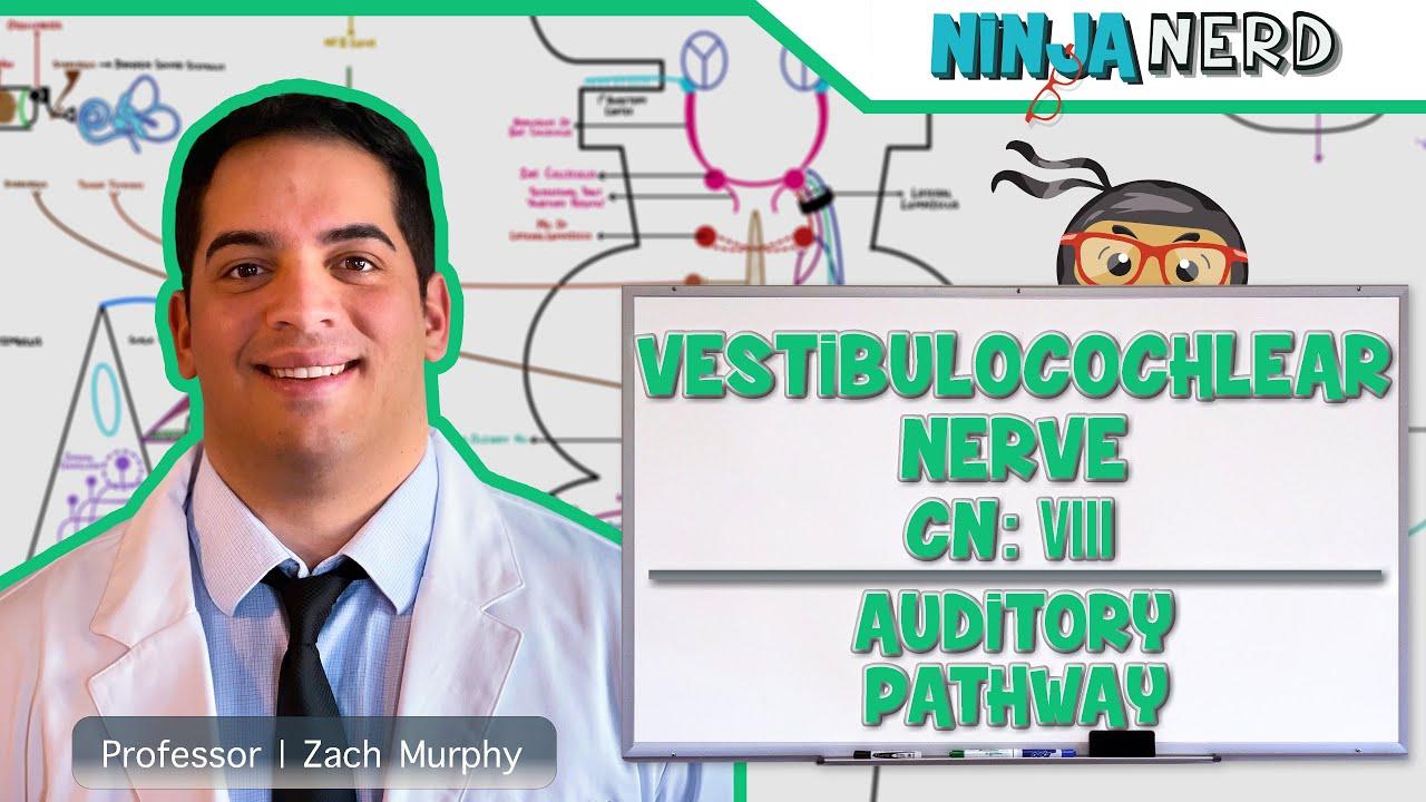 Neurology | Vestibulocochlear Nerve | Cranial Nerve VIII: Auditory ...