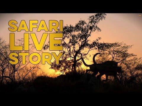 Chasing the cheetah family Mp3