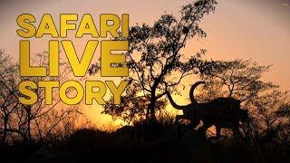 Chasing the cheetah family