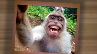 Күлкілі жануарлар селфиі//Funny Selfie Animal//Забавные селфи животных