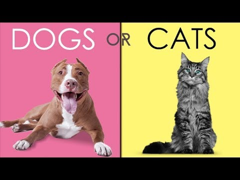 Should You Buy A Dog, Or A Cat?