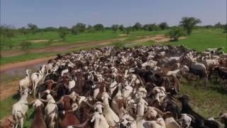 Vos bêtes de l'Aïd 2016 en Mauritanie