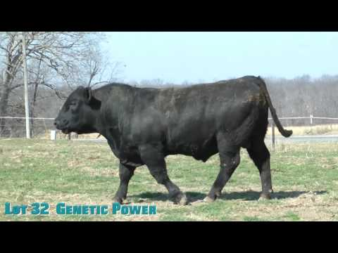 Lot 32  Genetic Power